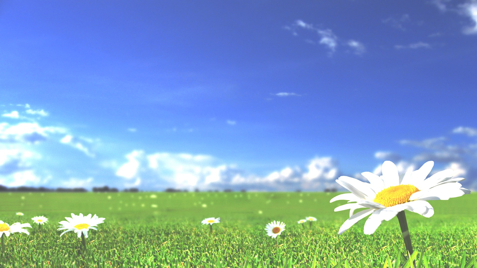 white flower wallpaper HD Backgrounds